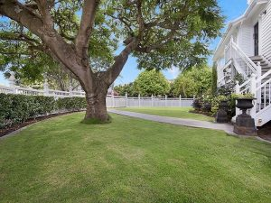 Large tree and freshly cut turf in Brisbane